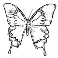 Butterfly Coloring Page Wecoloringpage 276