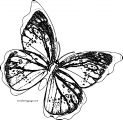 Butterfly Coloring Page Wecoloringpage 28