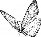 Butterfly Coloring Page Wecoloringpage 281