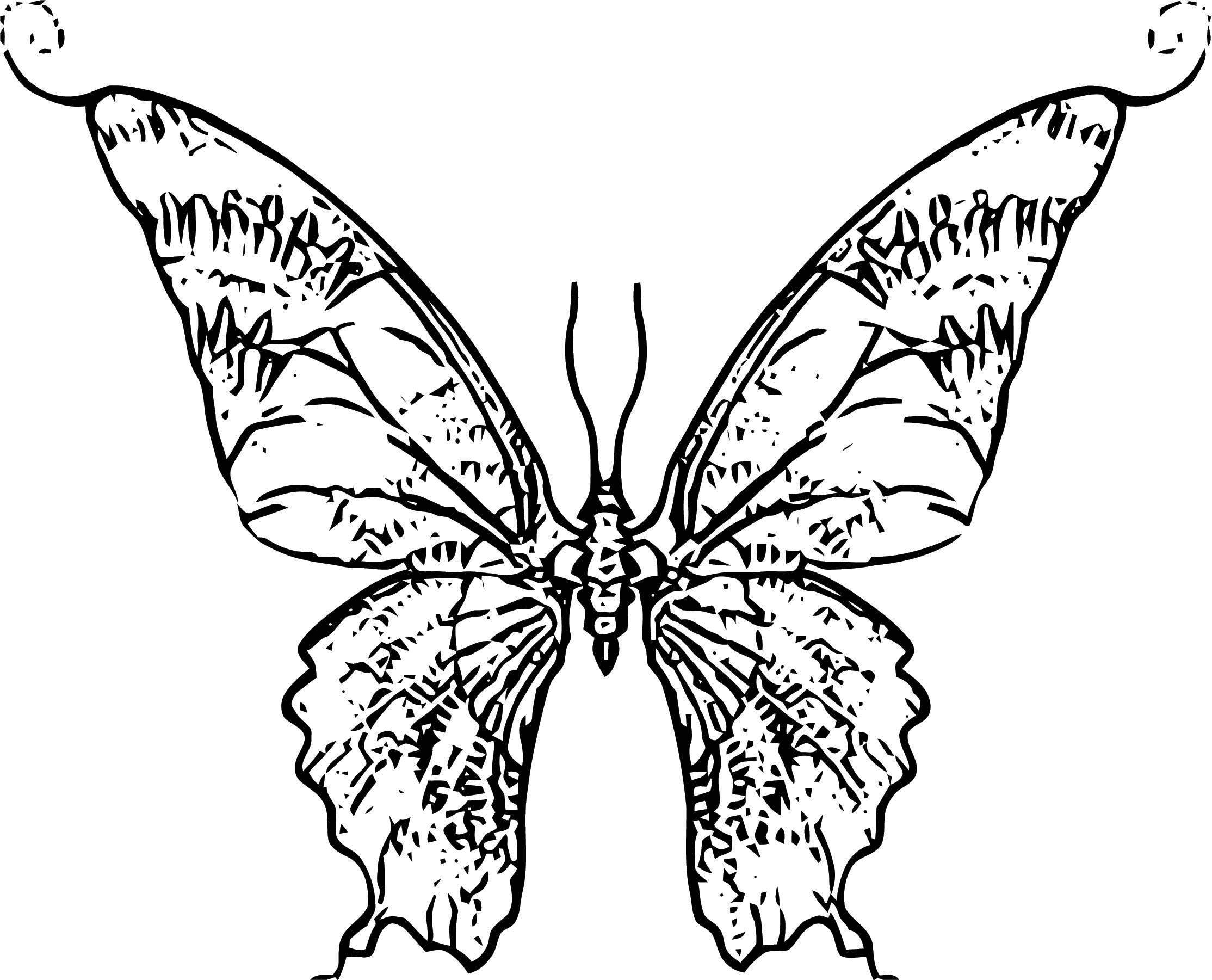 Butterfly Coloring Page Wecoloringpage 282