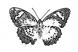 Butterfly Coloring Page Wecoloringpage 285