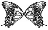 Butterfly Coloring Page Wecoloringpage 289