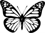 Butterfly Coloring Page Wecoloringpage 290