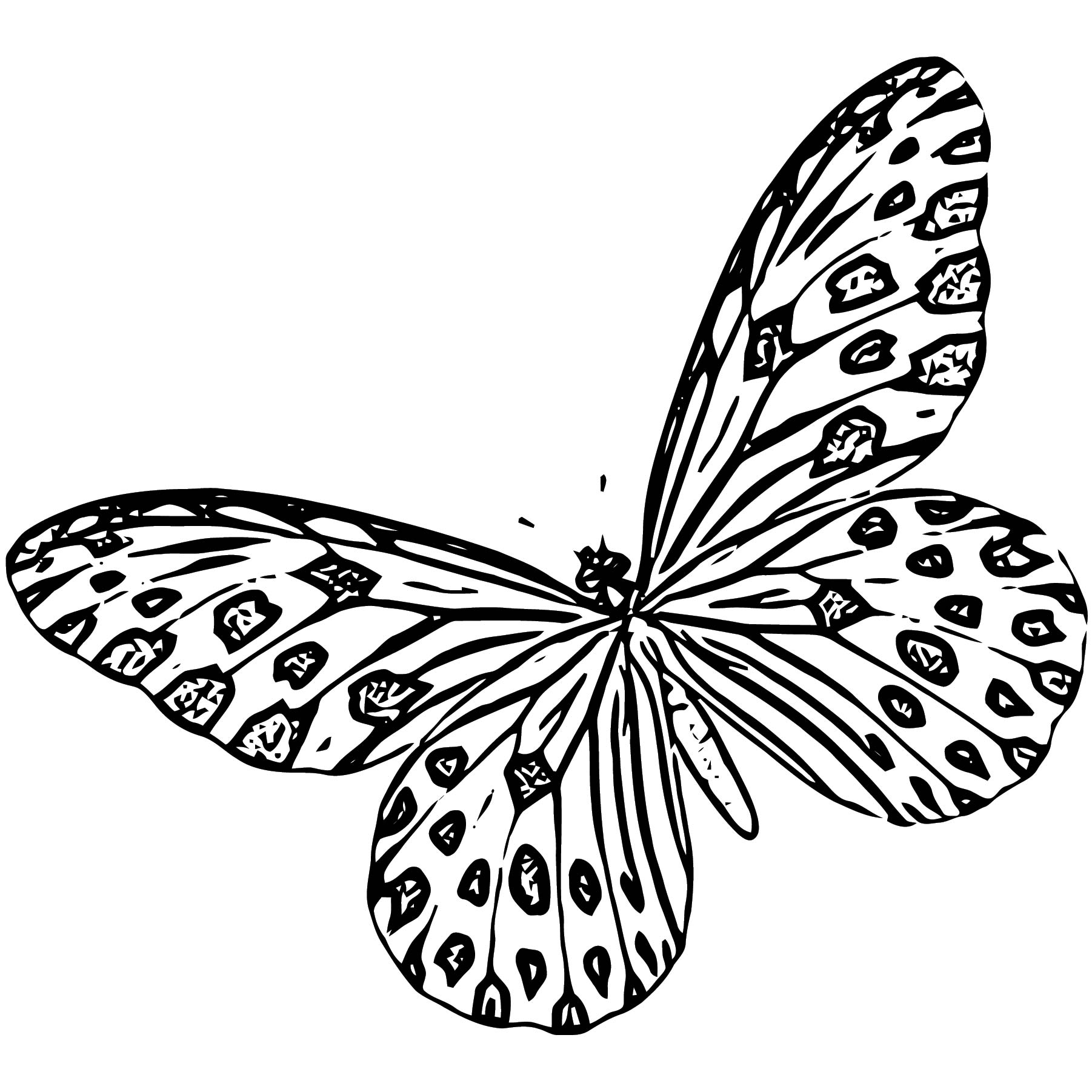 Butterfly Coloring Page Wecoloringpage 294