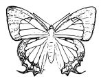 Butterfly Coloring Page Wecoloringpage 300
