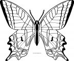 Butterfly Coloring Page Wecoloringpage 303