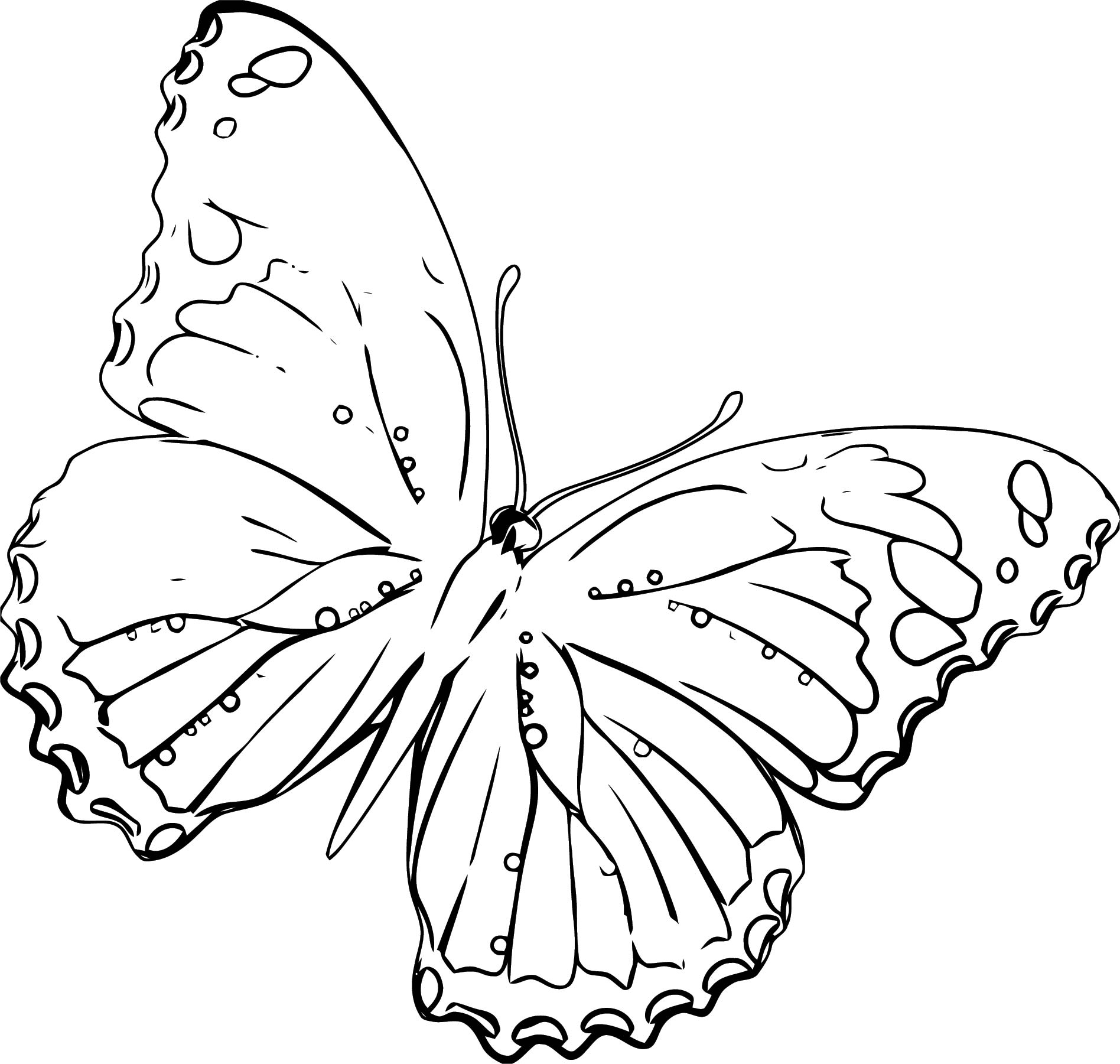 Butterfly Coloring Page Wecoloringpage 305