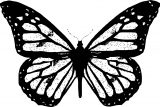 Butterfly Coloring Page Wecoloringpage 311