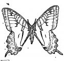 Butterfly Coloring Page Wecoloringpage 314