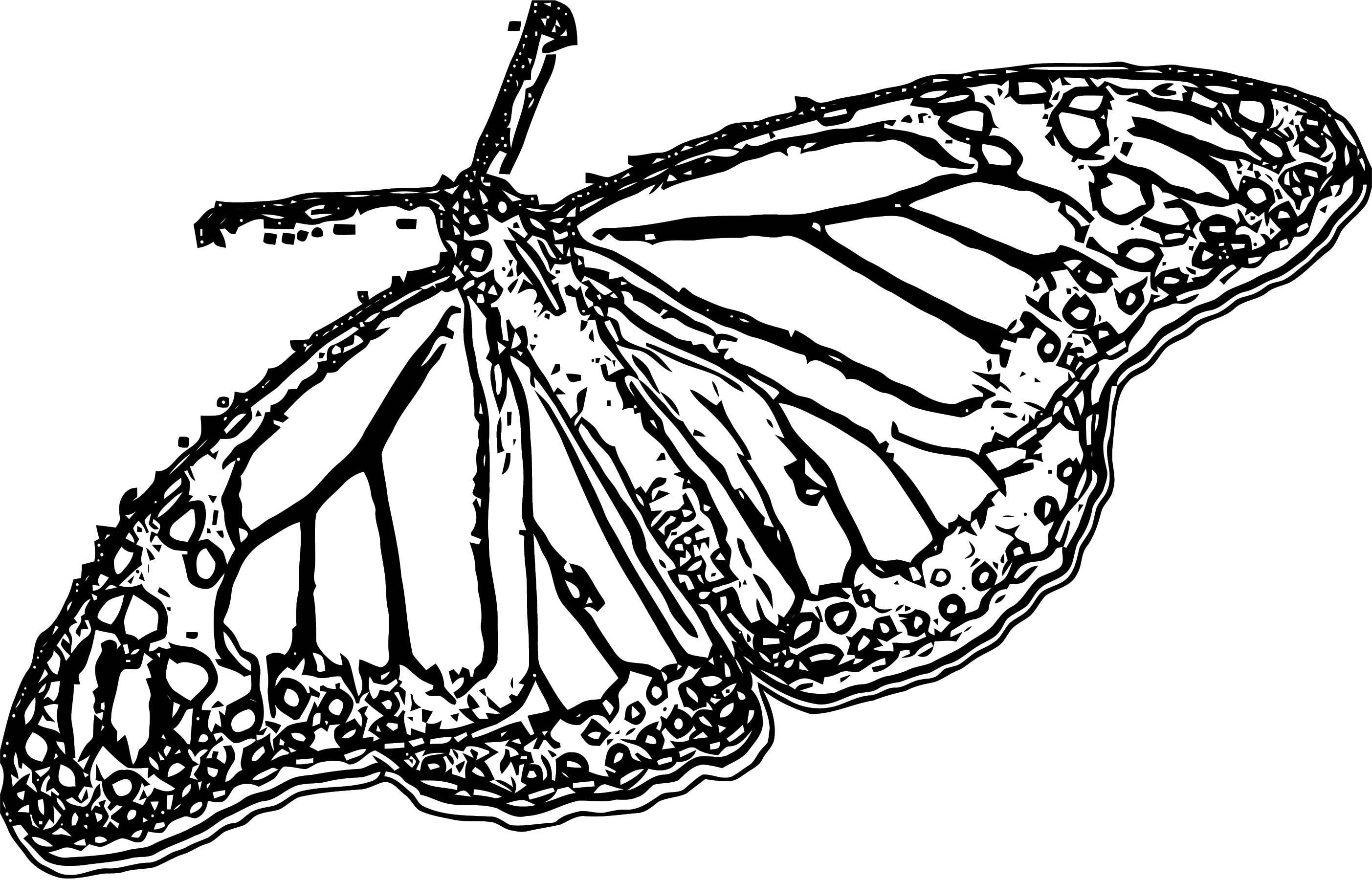 Butterfly Coloring Page Wecoloringpage 317