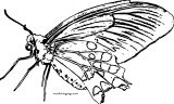 Butterfly Coloring Page Wecoloringpage 32