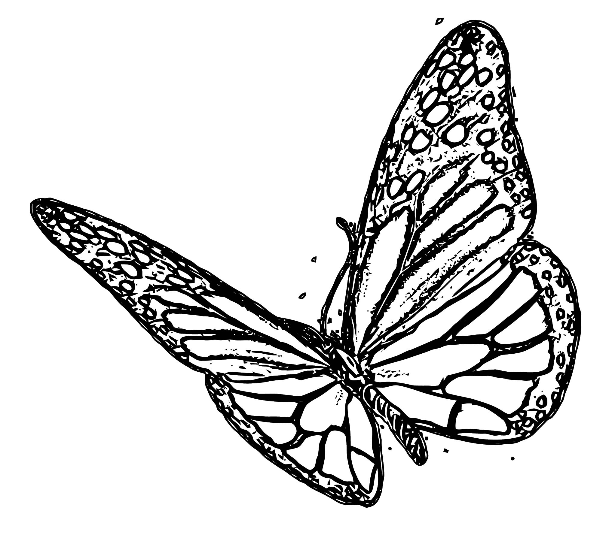 Butterfly Coloring Page Wecoloringpage 321