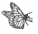 Butterfly Coloring Page Wecoloringpage 322