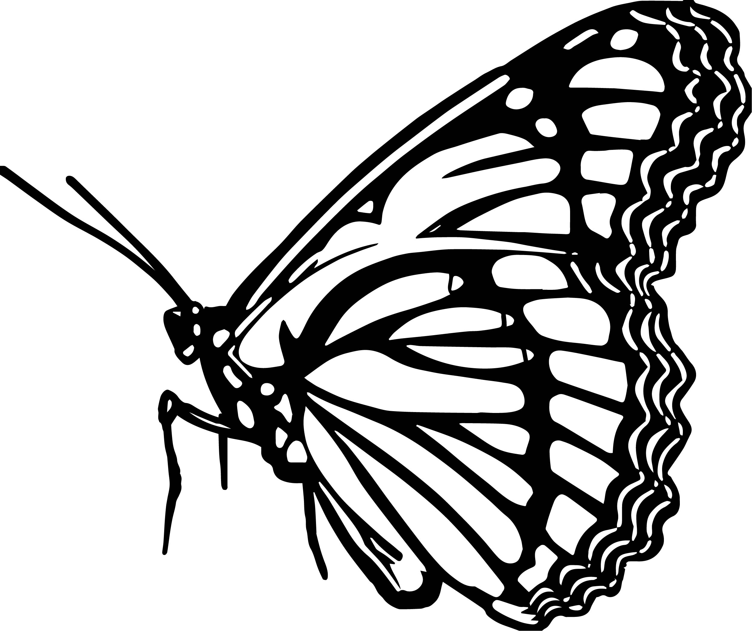 Butterfly Coloring Page Wecoloringpage 323