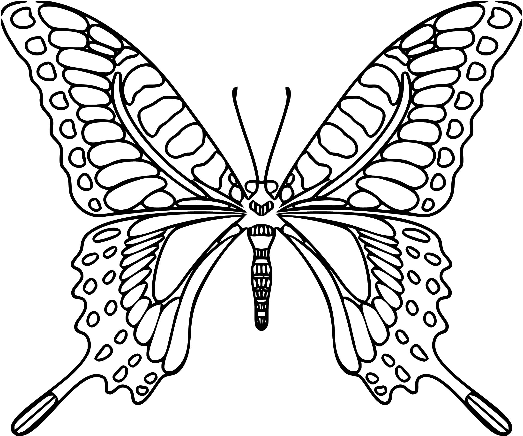 Butterfly Coloring Page Wecoloringpage 331