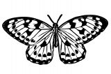 Butterfly Coloring Page Wecoloringpage 332