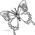 Butterfly Coloring Page Wecoloringpage 35