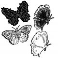 Butterfly Coloring Page Wecoloringpage 350