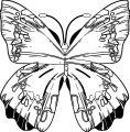 Butterfly Coloring Page Wecoloringpage 358