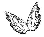 Butterfly Coloring Page Wecoloringpage 361