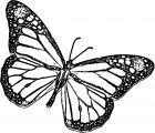 Butterfly Coloring Page Wecoloringpage 365