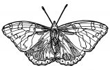 Butterfly Coloring Page Wecoloringpage 369