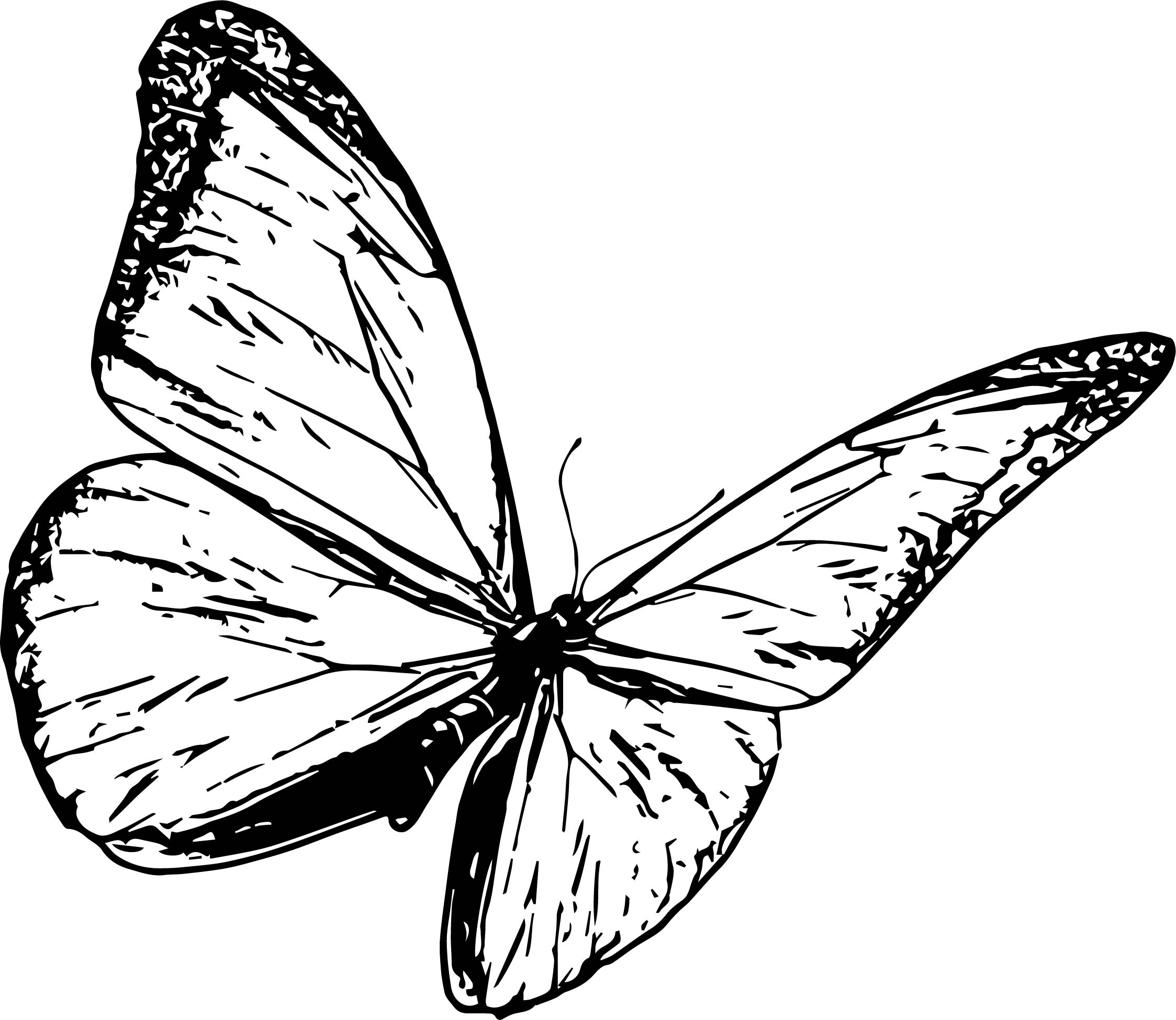 Butterfly Coloring Page Wecoloringpage 37