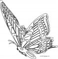 Butterfly Coloring Page Wecoloringpage 40