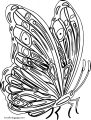 Butterfly Coloring Page Wecoloringpage 45