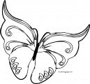 Butterfly Coloring Page Wecoloringpage 49