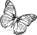 Butterfly Coloring Page Wecoloringpage 53