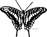 Butterfly Coloring Page Wecoloringpage 54