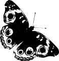 Butterfly Coloring Page Wecoloringpage 56
