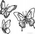 Butterfly Coloring Page Wecoloringpage 57