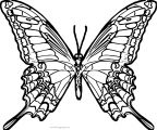Butterfly Coloring Page Wecoloringpage 58