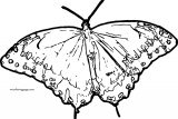 Butterfly Coloring Page Wecoloringpage 79