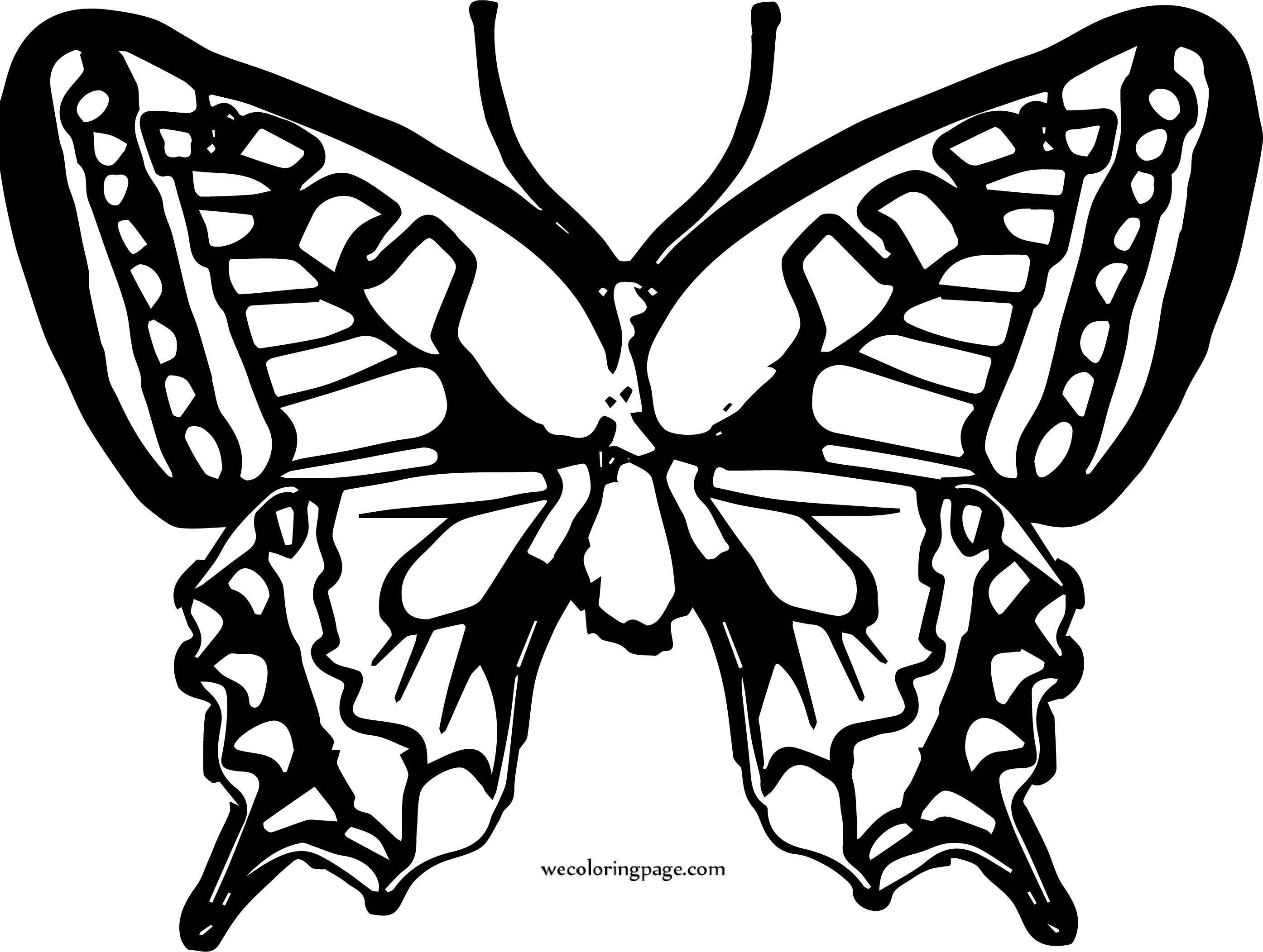 Butterfly Coloring Page Wecoloringpage 82