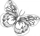 Butterfly Coloring Page Wecoloringpage 95