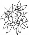Flower Coloring Page Wecoloringpage 035