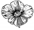 Flower Coloring Page Wecoloringpage 114