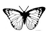 Greenish Butterfly Clipart Coloring Page