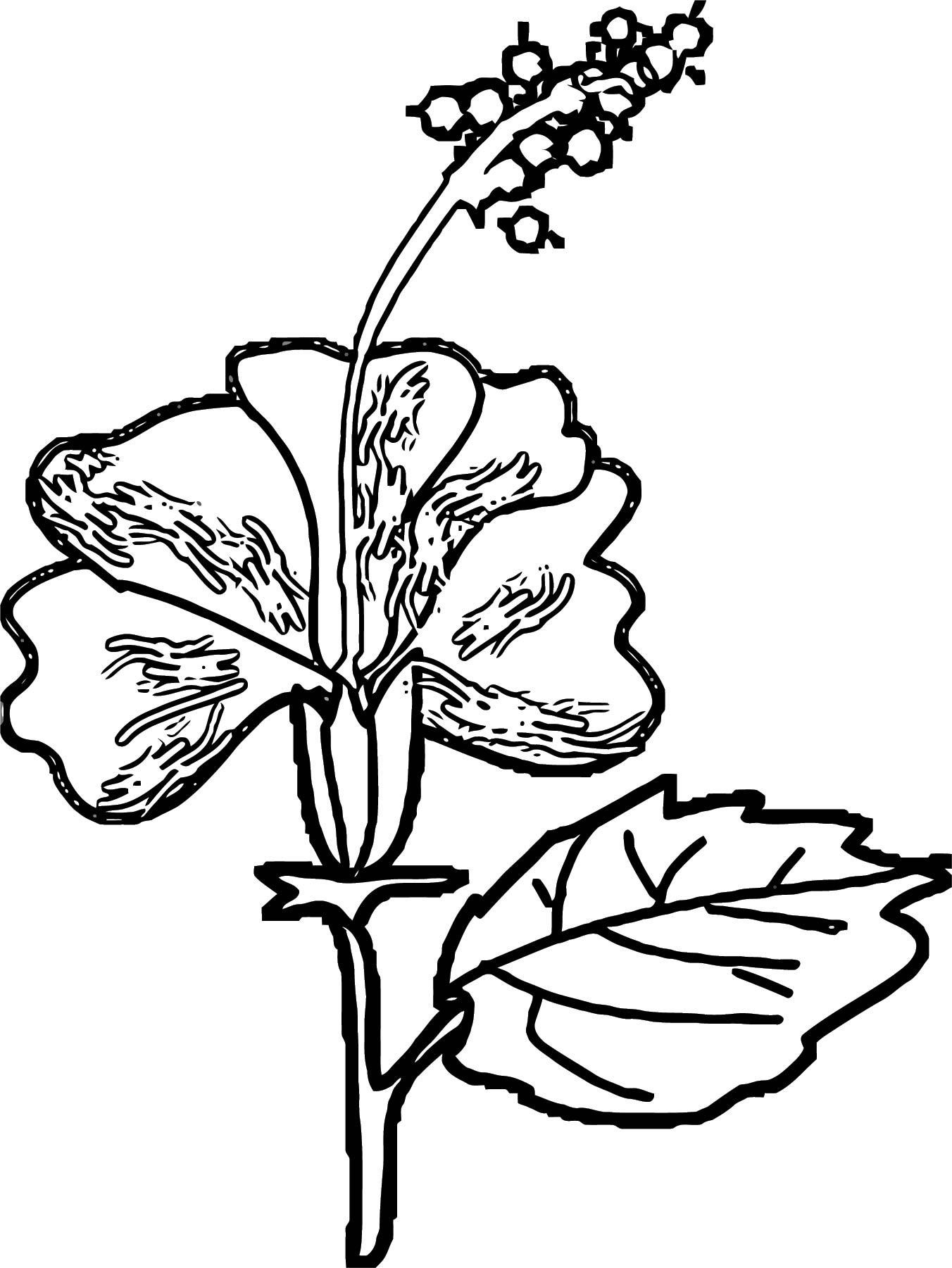 Hibiscus coloring page for Hibiscus coloring page