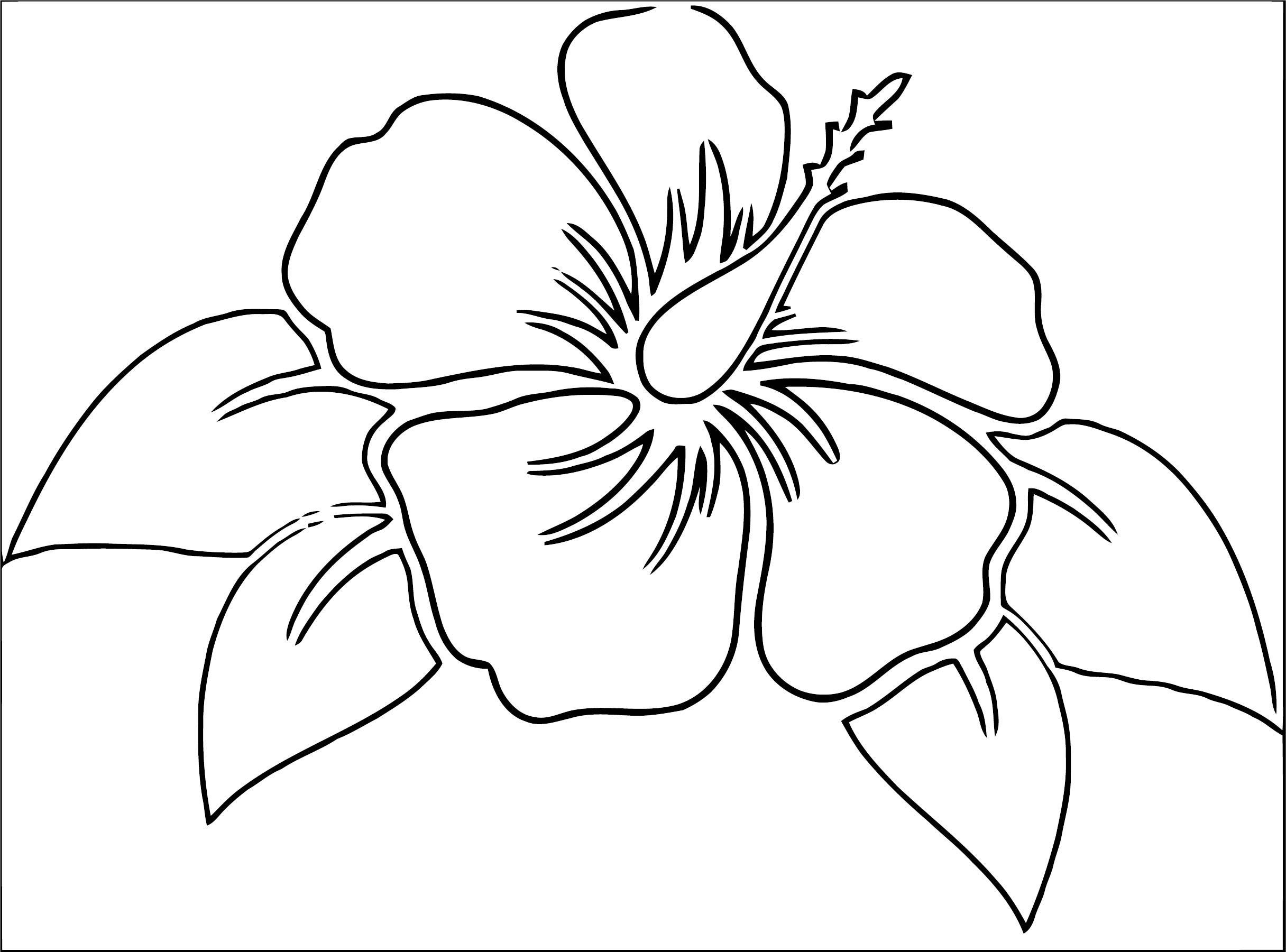 Hibiscus flower 0 coloring page for Hibiscus flower coloring page