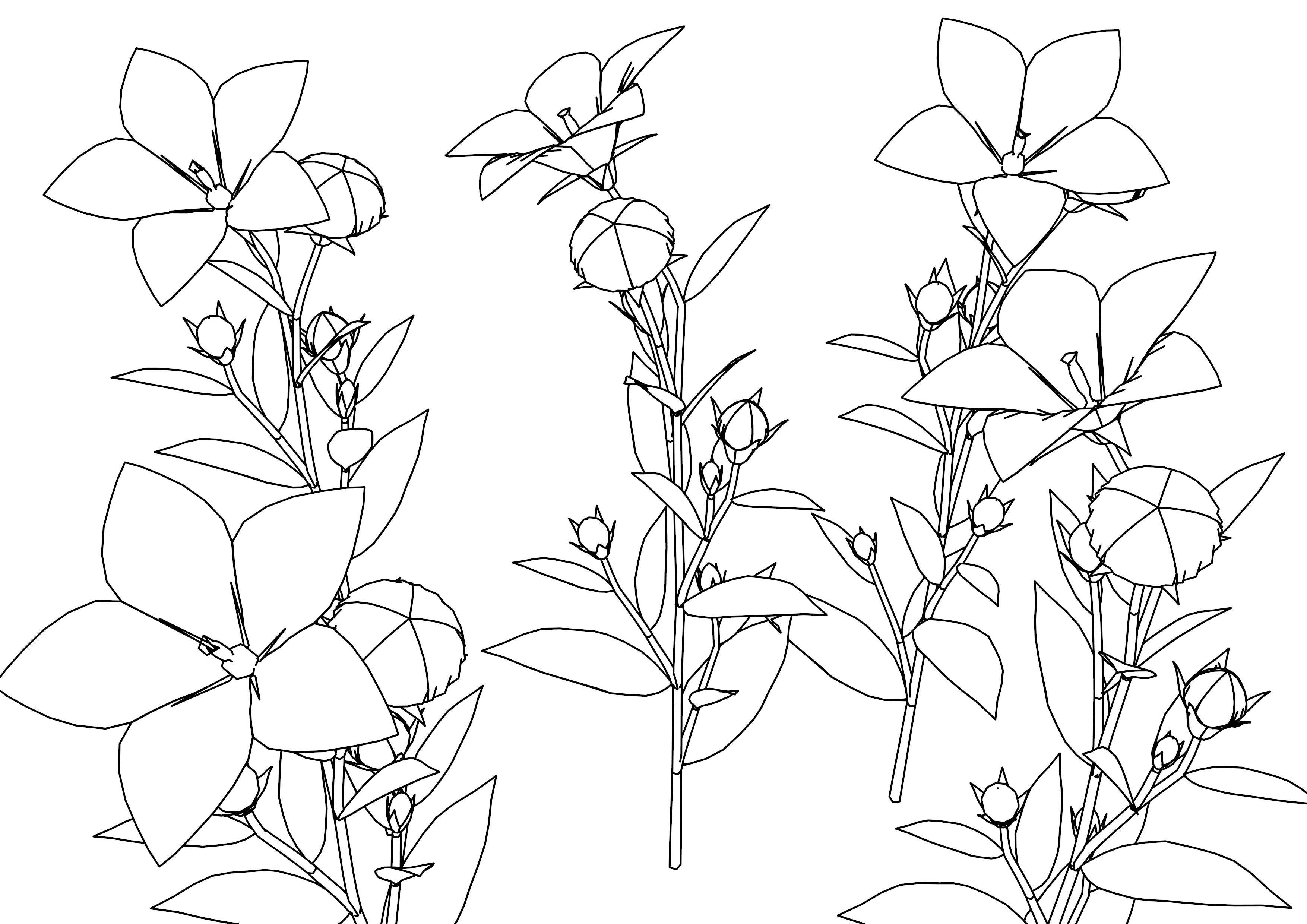 Kikyou Flowers Coloring Page