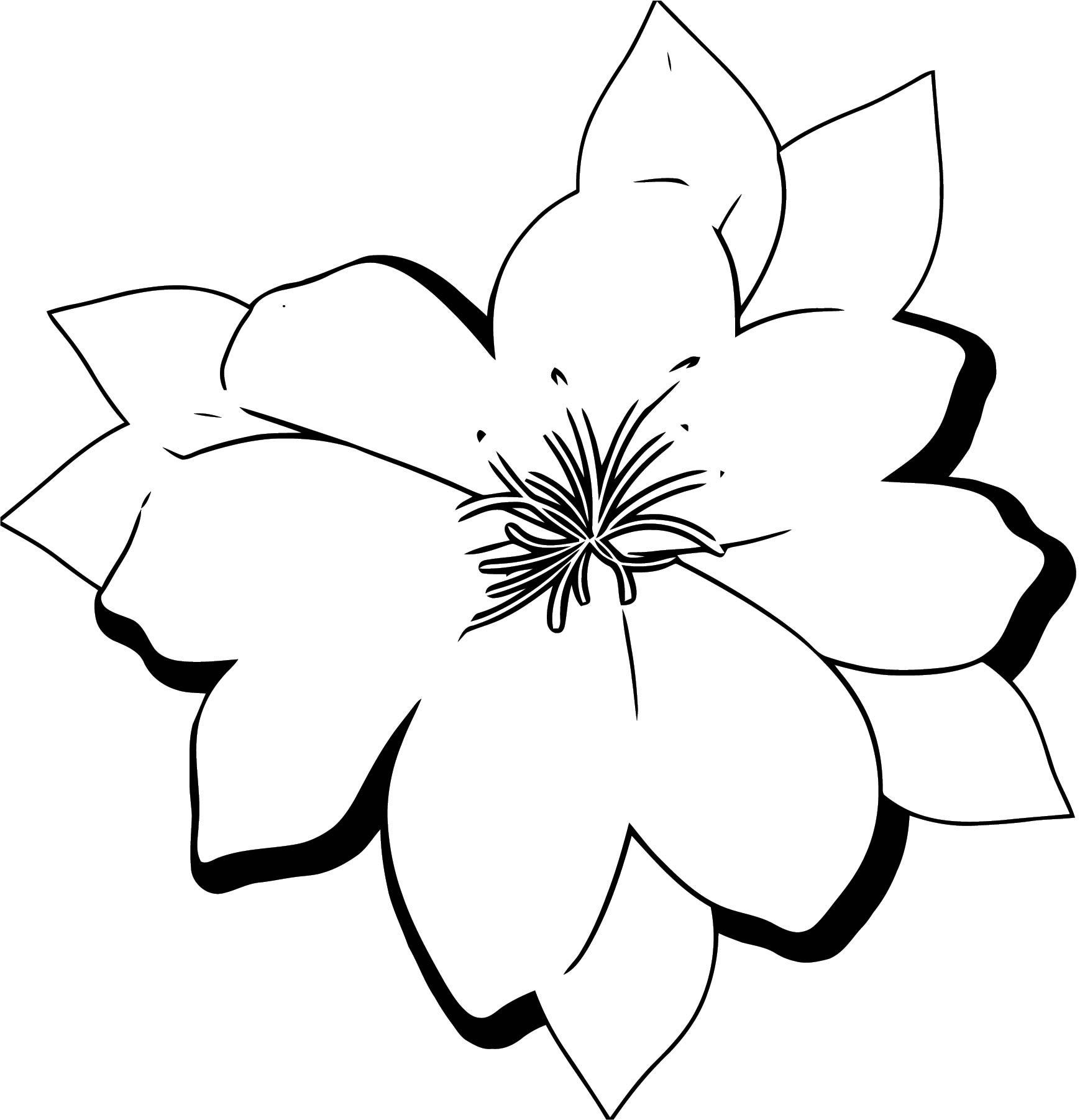 Large Flower Coloring Page