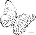 Large Transparent Multi Color Butterfly Clipart Coloring Page