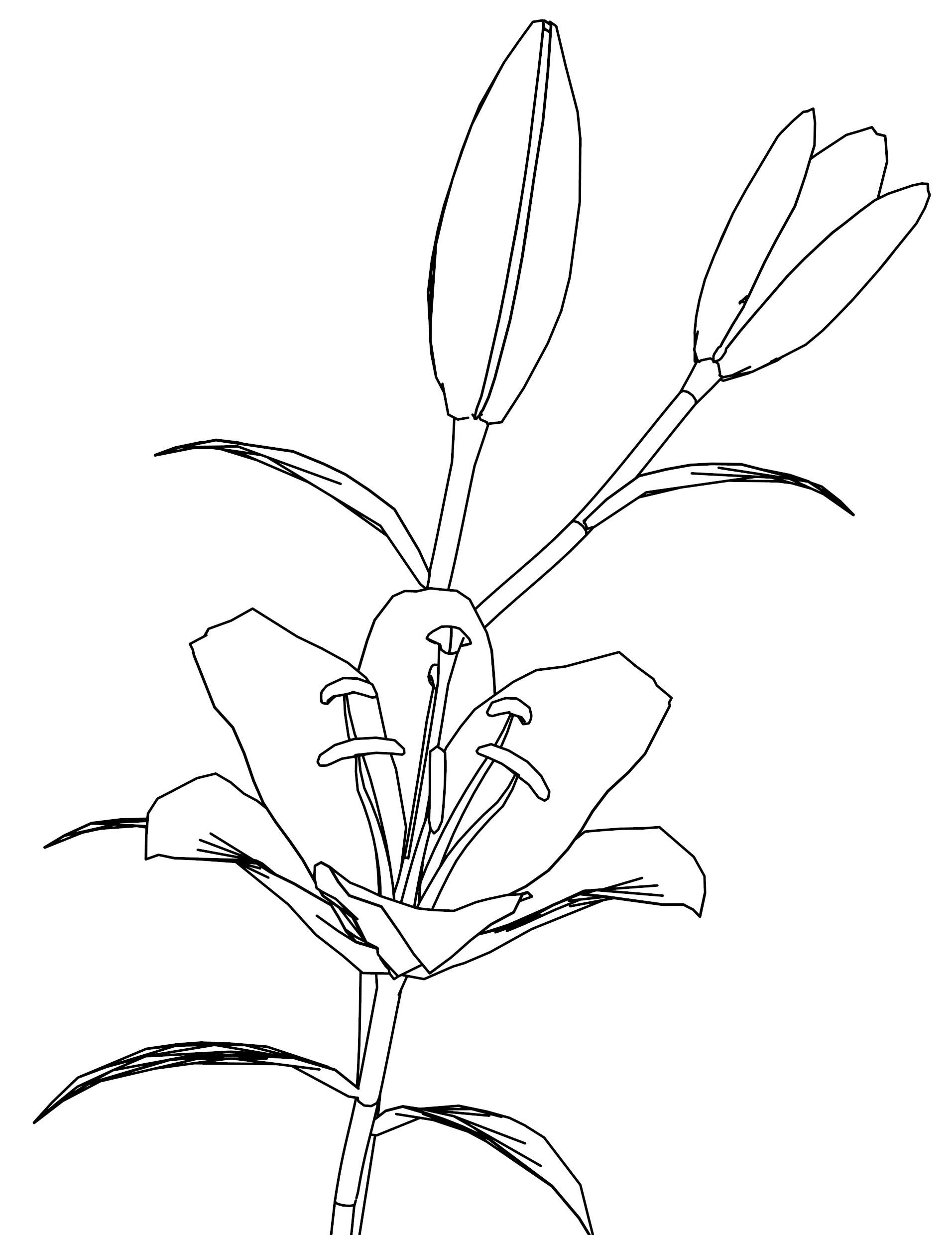 Lilyp Flower Coloring Page