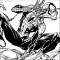 Spider Man Coloring Page WeColoringPage 204
