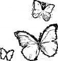 Three Butterfly Coloring Page