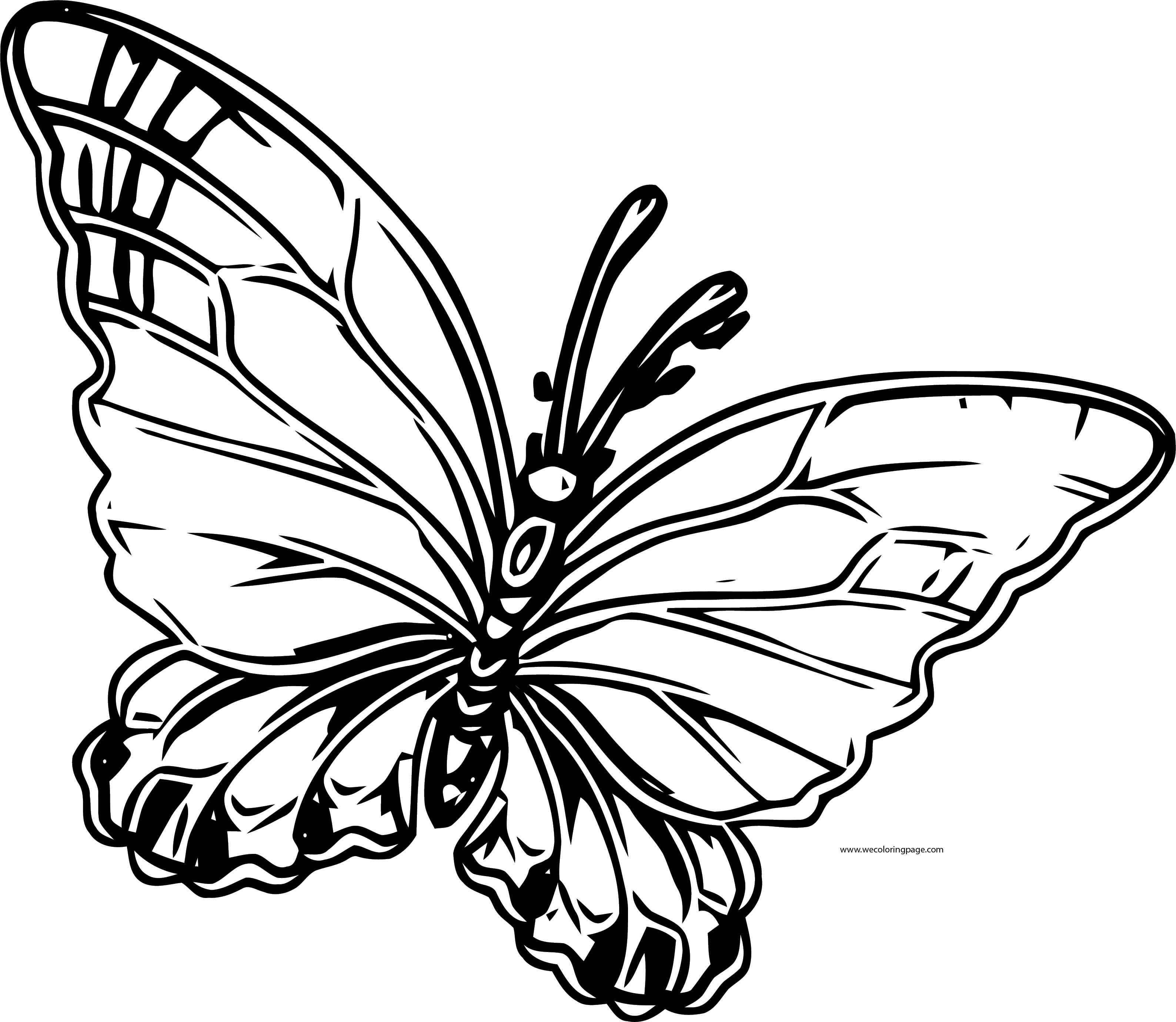Transparent Butterfly Clipart Coloring Page